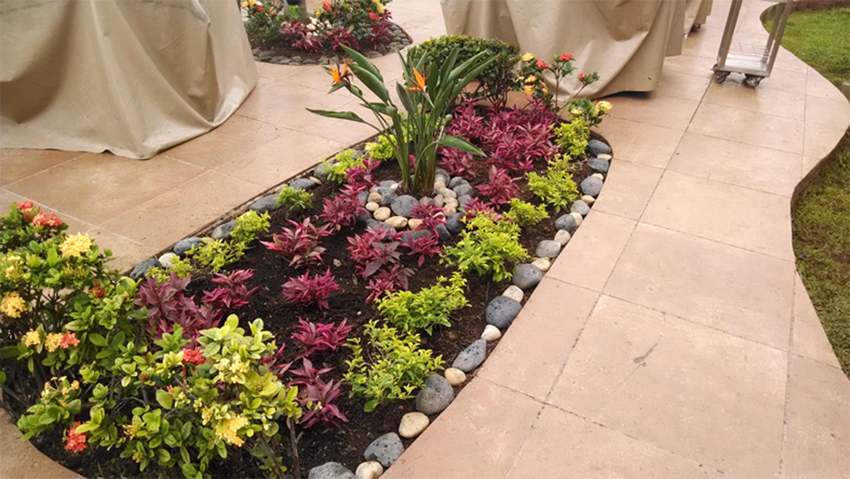 Dise o construcci n y mantenimiento de jardines en m rida servicio de jardiner a en m rida - Plantas de jardin fotos ...